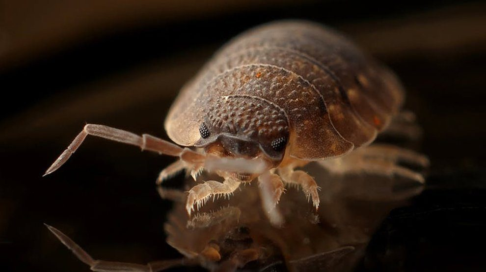 Find the Pest & Get Rid of Bed Bugs Effectively and Quickly