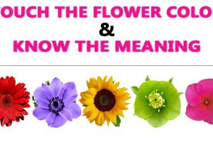 Flower Color Meaning