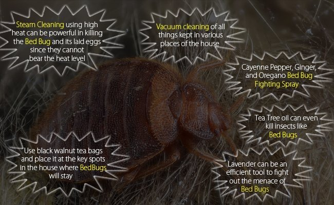 home-remedies-to-get-rid-of-bed-bugs