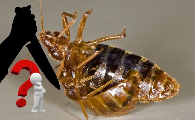how-to-kill-and-get-rid-of-bed-bugs