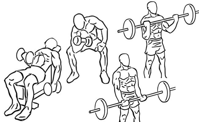 let-the-biggest-mass-builder-be-the-number-one-exercise - Biceps Training Tips