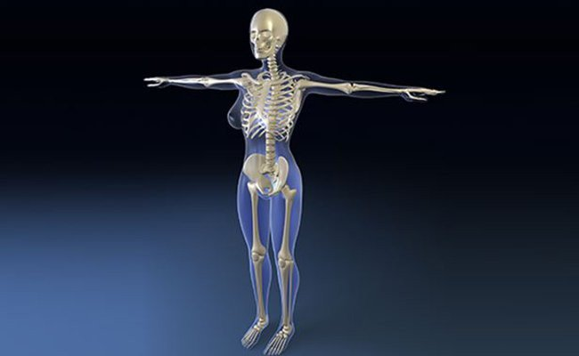 key-bones-in-the-human-skeletal-system