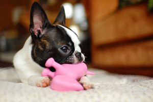 purchase-good-chew-toys-or-treat-for-your-pet