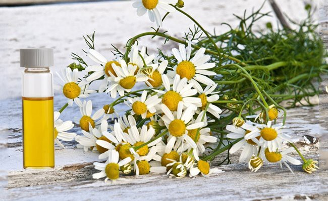 chamomile-essential-oils-for-hair-growth