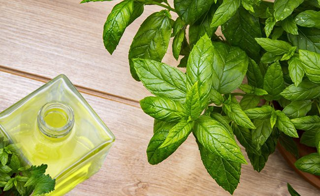 peppermint-essential-oils-for-hair-growth