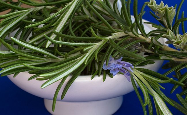 rosemary-essential-oils-for-hair-growth