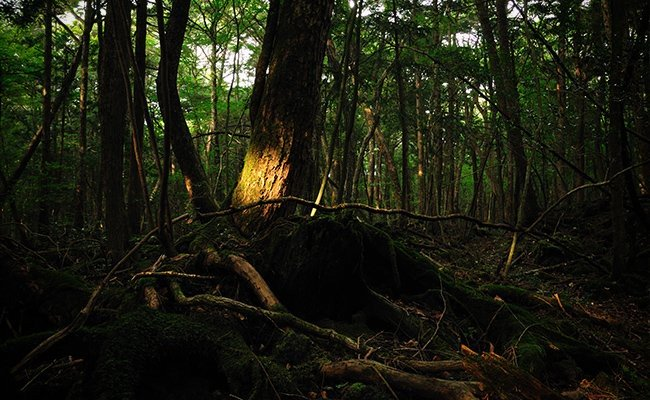 aokigahara-forest-japan - Most Haunted Places