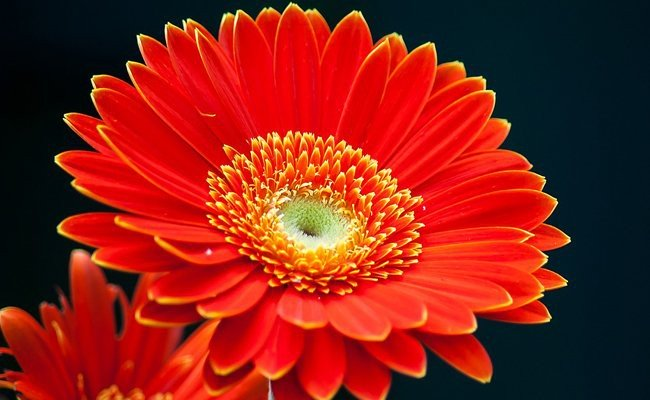 enthusiastic-and-upbeat-orange-flowers - Poetic Language Of Flowers