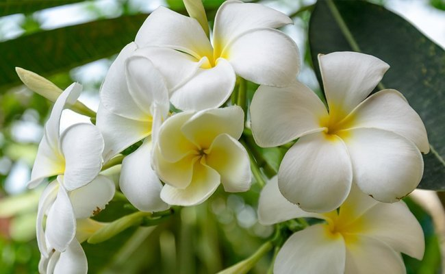 pristine-white-flowers - Poetic Language Of Flowers