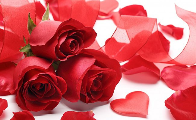 roses-red-flowers