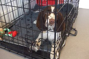 introducing-the-dog-to-the-crate