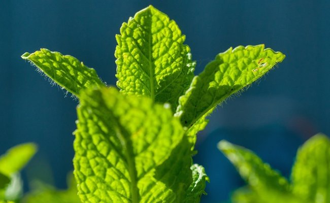 mint-leaves - Under Eye Dark Circles