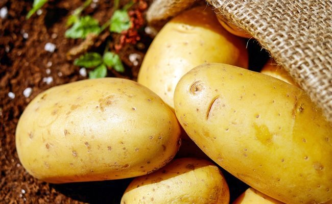 potato - Under Eye Dark Circles